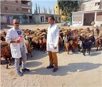 فحص وعلاج 2056 رأس ماشية لصغار المزارعين بالقليوبية مجانا