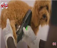 «مساج وسيشوار وبلايستيشن».. أحدث عربة متنقلة لعلاج وترفيه الكلاب | فيديو