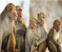 المركزية بحدائق الحيوان تناشد المواطنين بتسليم القرود والنسانيس من منازلهم |فيديو