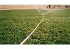 """""""الزراعة"""": 88 مليون جنيه حصيلة بيع 43 قطعة من أراضي بئر العبد"""