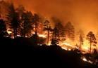 حاكم كاليفورنيا يطالب ترامب بإعلان الطوارئ بسبب حرائق الغابات