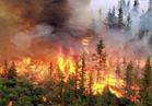 السيطرة علي حريق اندلع في مزارع النخيل بالوادي الجديد