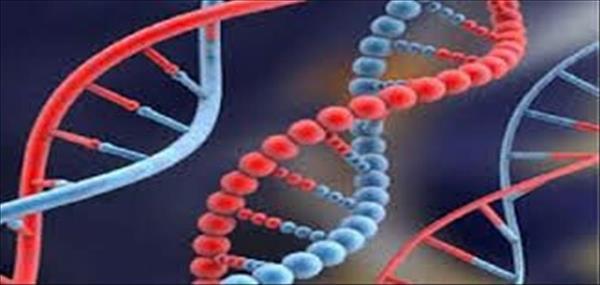 تحليل الجينات الوراثية للمصريين لاكتشاف الاجناس غير المصرية