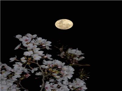 رصد لشكل القمر