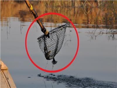 الكهرباء تصطاد عامل حاول صيد الأسماك بها-أرشيفية