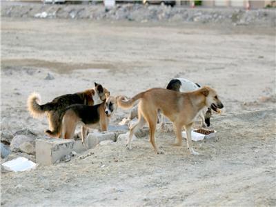 الكلاب الضالة - أرشيفية