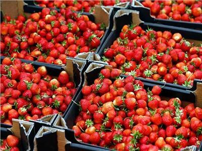 محصول الفراولة