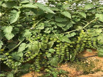 الزراعة تواصل حملات التوعية بأهمية «الصوب الزراعية»