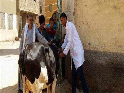 «الزراعة» تواصل حملاتها ضد الحمى القلاعية.. ومليوني حالة تحصين حتى الآن