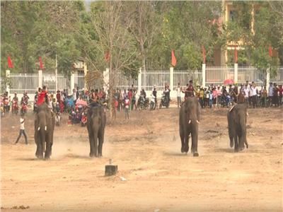 سباق الفيلة