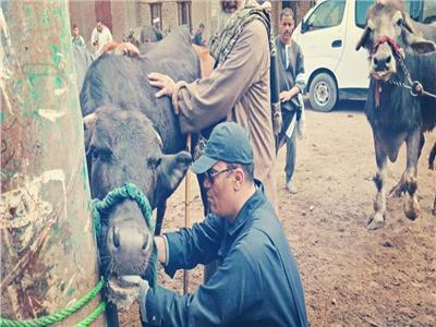 قوافل بيطرية مجانية بقرى محافظة الجيزة