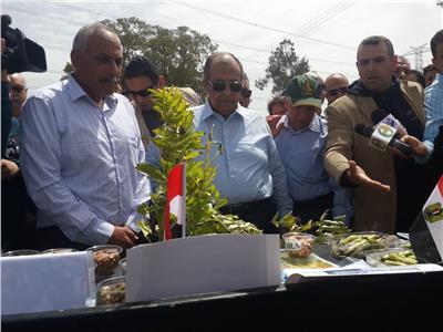 «أبوستيت»: الكتان محصول متعدد الأغراض ومربح للمزارعين وسندعم زراعته