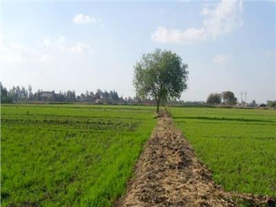 «الريف المصري» تدعو الشركات الأسترالية للاستثمار بمشروع الـ1.5 مليون فدان
