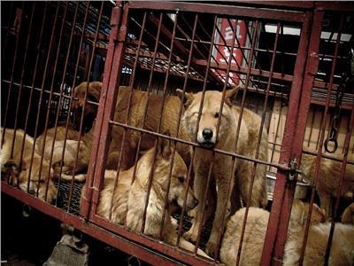 إغلاق أكبر سوق للحوم الكلاب في بوسان بكوريا الجنوبية