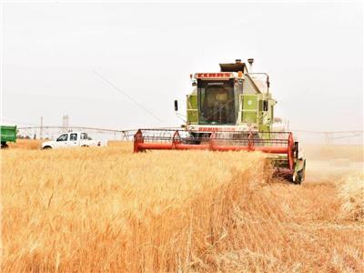 حصاد محصول القمح