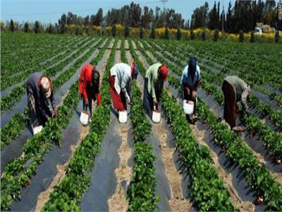 الزراعة تعقد المؤتمر الوطني الأول لدعم صغار المزارعين الأحد القادم