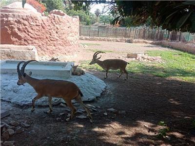 مدير حدائق الحيوان يكشف عن خطة التطوير و«عرض الدولفين»