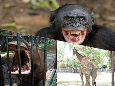 صيف جنينة الحيوانات.. حكايات مع «الدُش» البارد والآيس كريم