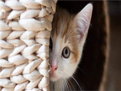 هل بيع القطط حرام عضو بـ الأزهر للفتوى يجيب بوابة أخبار اليوم الإلكترونية