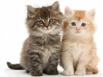 بمناسبة اليوم العالمي للقطط .. 3 وصفات لطعام منزلي