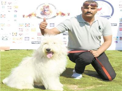 كلب الأرمنت