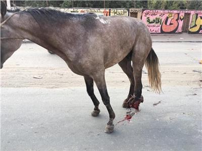 وجدوه يبكي بحرقة.. انتفاضة أهل المرج لإنقاذ حصان من الاكتئاب