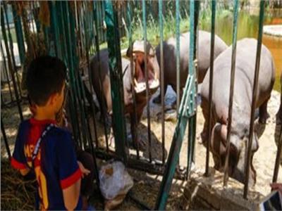 عيد الأضحى 2019| حديقة الحيوان تواصل فتح أبوابها للزائزين في ثالث أيام العيد