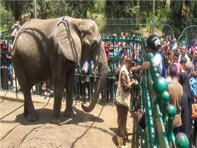 عقب وفاة الفيلة نعيمة أصبحت حديقة الحيوانات بدون أفيال