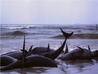 انتحار الحيتان ظاهرة تثير حيرة العلماء