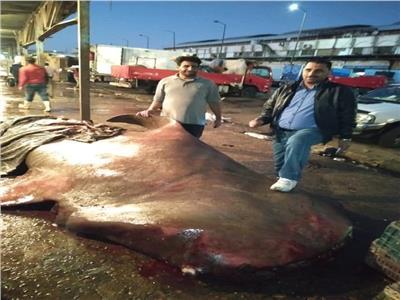 لقرش الحوتى