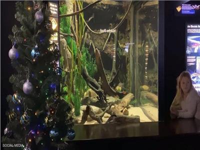 «دبابيس» ثعبان البحر