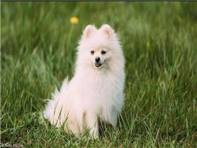مصرع أول كلب مصاب بكورونا