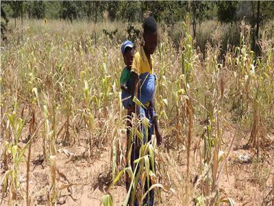 المجاعات تهدد زيمبابوي