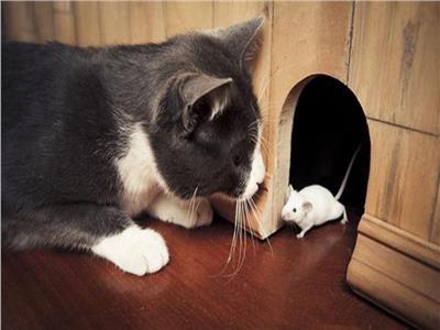 العلاقة بين القطط والفئران