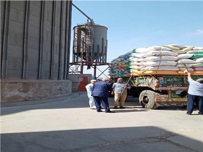 محصول القمح لهذا العام