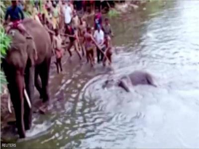 أنثى الفيل وجنينها