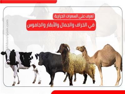 تعرف على السعرات الحرارية في الخراف والجمال والأبقار والجاموس