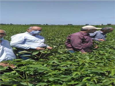 المرور على حقول إنتاج الهجن للذرة