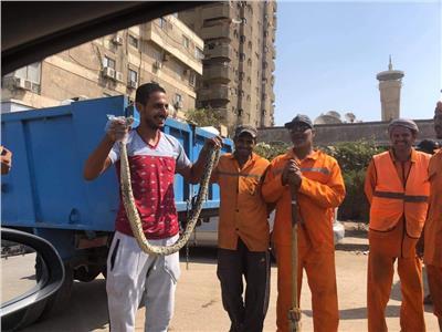 العثور على ثعبان في القمامة بمدينة نصر