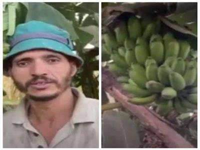 «بوابة أخبار اليوم» في أرض الموز بالقليوبية