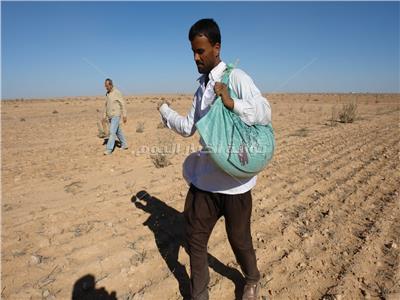 موسم الخير بالصحراء الغربية بدء تخزين الأمطار وزراعة القمح والشعير