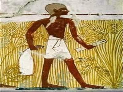 الفلاح «خو انبو»