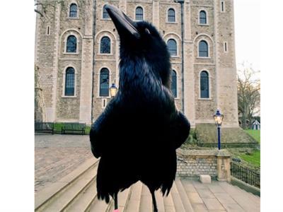 ملكة الغربان