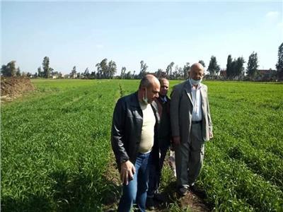 زراعة المنوفية برامج توعية إرشادية مكثفة للمزارعين للنهوض بمحصول القمح