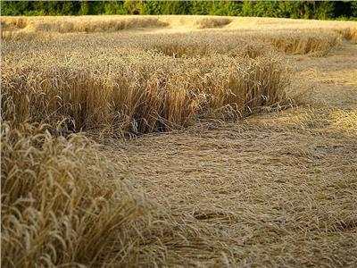 تغير المناخ يضرب المحاصيل