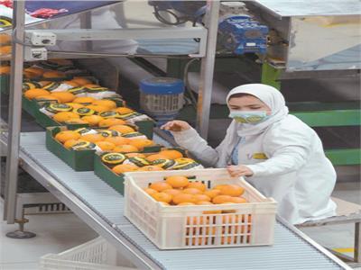 إعداد البرتقال للتصدير للخارج