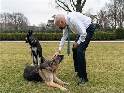جو بايدن مع الكلبين