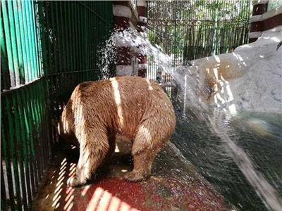 بيت الدببة في حديقة الحيوان