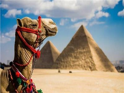 خبير: 11.3% نسبة مساهمة السياحة في الاقتصاد المصري