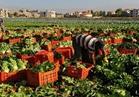 الحاصلات الزراعية: وفد رسمي بالسعودية خلال أسبوعين لرفع الحظر عن صادرات الفراولة